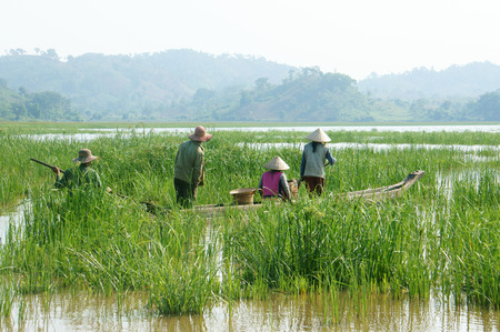 work boat: Group of Asian farmer go to work by row boat on Lak lake in summertime family of ethnic minority grass on lake amazing view for Asia travel Daklak Vietnam  Stock Photo
