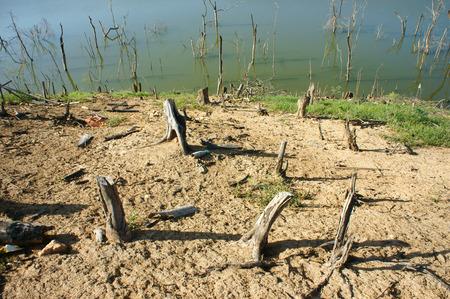 albero secco: La deforestazione in Vietnam campagna ceppo solitario giungla danneggiato make ambiente di vita del cambiamento climatico � stretto questo � globale problema paesaggio desolato in giornata con albero secco