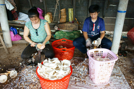 ben oil: BEN TRE, VIET NAM- JUNE 1: Group of Asian worker working at coconut workshop to process coconut fruit, Vietnamese people split copra, material for candy and oil, Mekong Delta, Vietnam, June 1, 2015