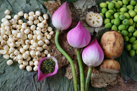 Collection of lotus, pink lotus flower, green seed, white lotus seed in fresh and dry, herbal tea of this flora, with amazing, abstract concept in vibrant color, this food make healthy , good sleep