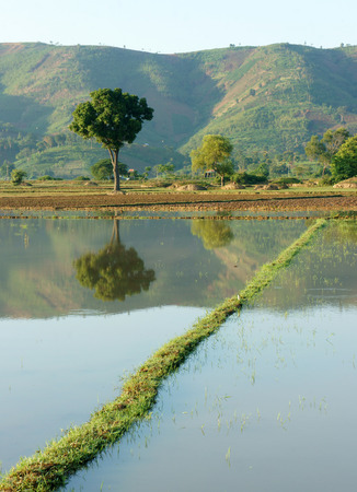 buon: Agriculture field after harvest season, beautiful landcape of nature, flooded farm, tree reflect on water, chain of mountain behind, green countryside of Daklak, Viet Nam Stock Photo