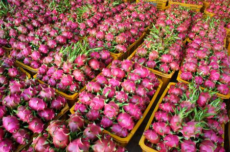 canasta de frutas: Comida vietnamita para la exportaci�n, drag�n fruta, producto agropecuario del Binh Thuan, Vietnam, la c�scara de color rosa, cesta de frutas de embalaje para la venta, esta fruta tropical tambi�n nombrar undatus Hylocereus, Pitahaya