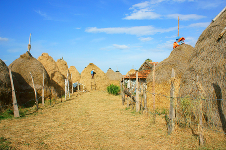 yellow agriculture: Vietnamese village, stack of straw, food reserve for cattle after crop, Vietnam is agriculture country. Beautiful landscape, cowshed and mountain make calm rural at Khanh Hoan, Viet Nam