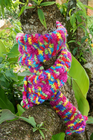 sudden: Colorful wollen scarf on green tree trunk on winter day, a sudden gift, beautiful knitted handmade make warm in cold day