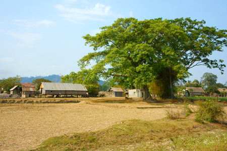 buon: Vietnamese rural at Buon Me Thuot, Daklak, group of house on stilts with large green tree, fresh air, wooden house, poor life at Vietnam countryside
