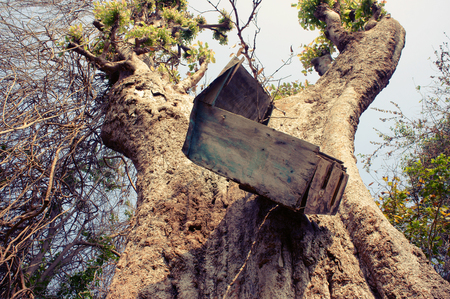 danger box: Amazing view with old mailbox hang overhead on large tree trunk in Vietnam forest, funny and danger mail box Stock Photo
