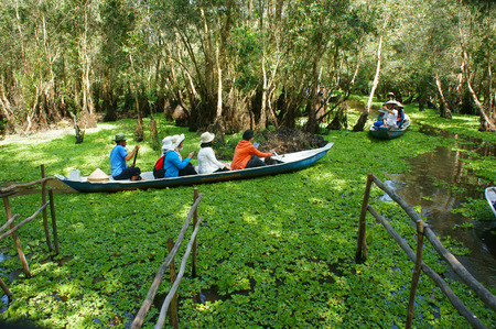 row boat: AN GIANG, VIET NAM- OCT 17: Group of traveler traveling nature landscape at Chau Doc, Mekong Delta, Tra Su indigo forest, crowded of people on row boat, make ecotourism, Angiang, Vietnam, Oct 17,2015