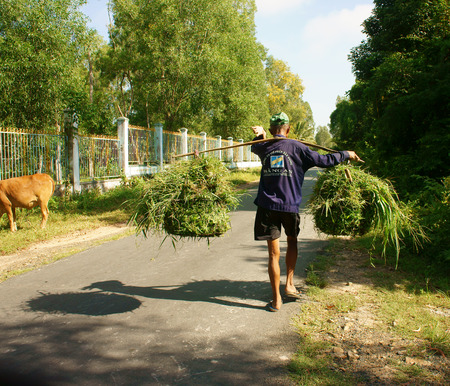 road shoulder: AN GIANG, VIET NAM- SEPT 20: Vietnamese old man carry grass basket on shoulder, he walking on countryside road, this green grass as food for cattle, Angiang, Veitnam, Sept 20, 2014 Editorial