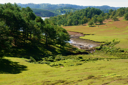 lat: Dalat landscape, nature reserve, grass field among pine jungle on day, Da Lat, Vietnam  is famous place for ecology travel, beautiful countryside in spring Stock Photo