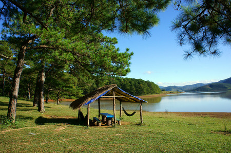 ecotourism: Dalat countryside landscape, Suoi Vang, place for travel, camp under pine tree among pine forest, beautiful scene for ecotourism at Da Lat, Vietnam, fresh air, green grass, harmony nature