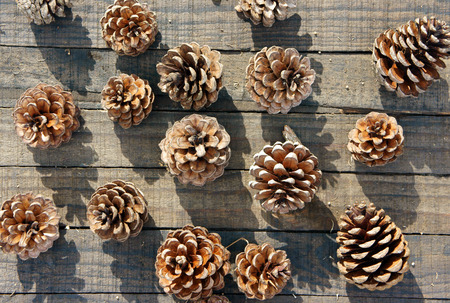 Group of pine cone to decorate on Christmas holiday, brown pinecone with shadow on wood background