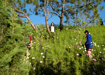 dalat: DA LAT, VIET NAM- JAN 1: Crowded scene at Dalat flower park at flower festival in spring, group of traveler visit nature garden on holiday, pure atmosphere make tourist enjoy,  Vietnam, Jan 1, 2016