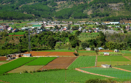dalat: Wide agriculture area at Dalat countryside, Vietnam on day, new crop for spring, flower field and vegetable farm under mountain, panorama of farmland, farmer working on plantation, Da Lat, Viet Nam