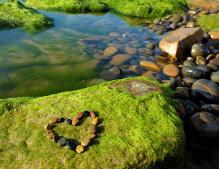 amazing: Love background with heart shape at beach, amazing arrange from pebble on green seaweed and stone background for couple in valentine day, a day for couple