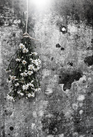 lonesome: Amazing bouquet of flower on old wall background, simple daisy flower on ancient wall make sad, lonely feeling Stock Photo