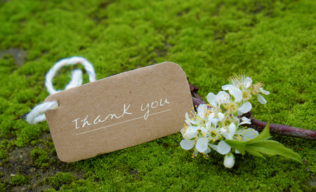thankyou: Thank you background on green moss, message for gratitude, beautiful white plum flower on green background with thankyou text for mother day or father day