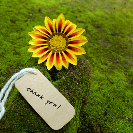 Thank you background on green moss, message for gratitude, beautiful colorful daisy flower on green background with thankyou text for mother day or father day Stock Photo