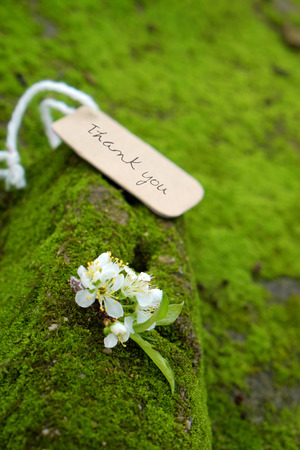 Thank you background on green moss, message for gratitude, beautiful white plum flower on green background with thankyou text for mother day or father day