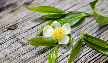 thankyou: Tea leaf and tea flower on wooden background, pure white flowers so nice Stock Photo