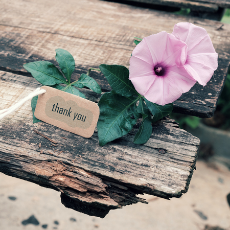 Thank you background on wooden background, message for gratitude, beautiful violet morning glory flower on wood with thankyou text for mother day or father day