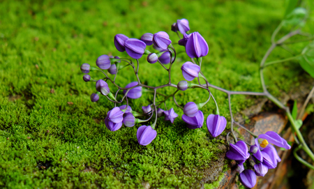Wonderful nature background with beauty violet flowers on green moss background, abstract with close up of purple petal make calm spirit Stock Photo