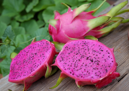 Eating dragon fruit, a tropical fruits, Vietnam agriculture product, with purle, pink color, close up of delicious dessert at garden