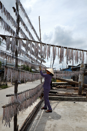 Vietnamese woman dry seafood at Ca Mau fishing village, Mekong Delta, Viet nam. Dried fish is popular Vietnam food, can store for long time Stock Photo