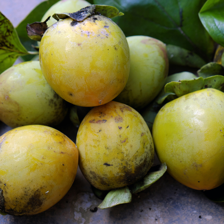 persimmon tree: Group of persimmon fruit just harvest from persimmons tree, is special agricultural product of tropical country as Vietnam
