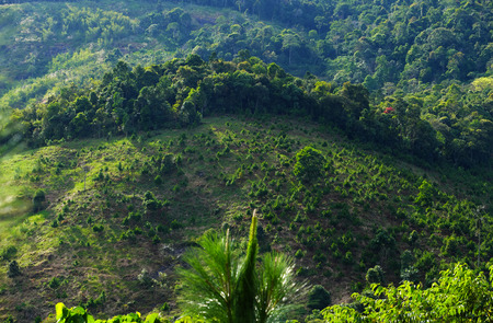 forestation: Reforestation on hill at Bao Loc mountain pass, Vietnam, pine tree planted to cover bare hill, forest protection make environment go to better