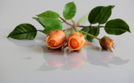 Wonderful clay art with orange roses flower relect on white background, beautiful artificial flowers of craftsmanship