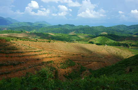 Scene of deforestation for agriculture at Vietnamese highland as Lam Dong, Daklak,  vast bare hill, forest land into agricultural land, this make climate change, affect to living environment