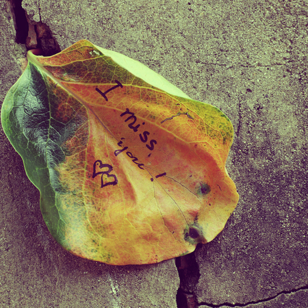 i love u: the word  i miss you on old leaf, miss u message for far away lover on wall background