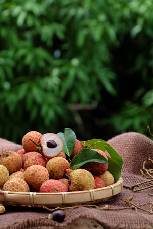 Close up of litchi fruit or lychee fruits, a tropical agriculture product at Luc Ngan, Bac Giang, Vietnam, basket of Vai thieu on green background
