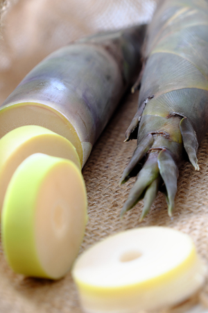 Close up of two bamboo shoot on burlap background, popular Vietnam vegetable in rainy season