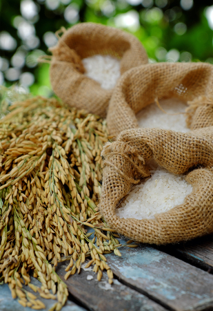 ration: Close up of paddy grain and rice seed on green background, sheaf of rice in yellow and basket of grains