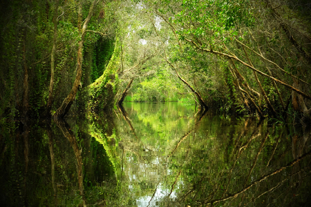 Wonderful Vietnam landscape at Mekong Delta, row of tree reflect on water, canal through melaleuca forest, nice scenery with entrance gate to heaven make wonderful place for ecotourism Stock Photo