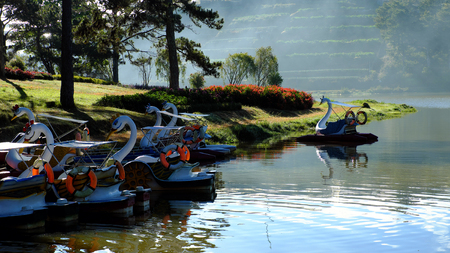 Group of duck boat, vehicle  transport  and relax on water for tourism, reflect on surface water at Than Tho lake, one of destination for travel at Da Lat city, Viet Nam, lake among pine forest