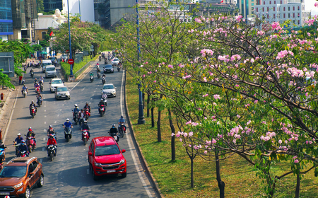 HO CHI MINH CITY, VIET NAM- MARCH 21, 2019: Beautiful landscape of Saigon from high view, street with vehicles as motorbikes, car move under tabebuia rosea flower tree, city beautiful with pink flower
