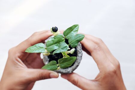 human hands hold seedlings for environmental protection, concept focus on green plant, blurred background on white from top view