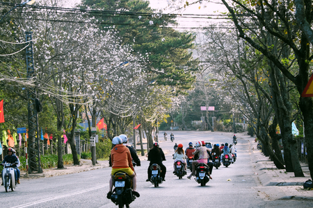 DA LAT CITY, VIET NAM- FEB 19, 2018: Amazing landscape in springtime, row of white flower tree bloom along street, beautiful Bauhinia variegata in white at travel city in spring, Vietnam