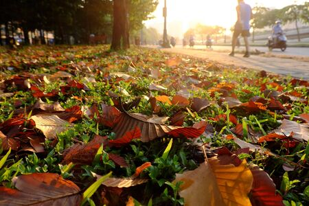 Wonderful scene at early morning in park, with leaves from tree fall on grass field, man do exercise by walk on pavement white people moving on street in warm sunlight ray at Ho Chi Minh city, Vietnam