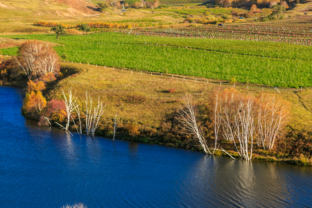 Autumn landscape of Inner Mongolia, golden pastures and deep blue lake