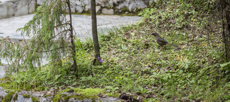 foraging: Foraging birds Stock Photo