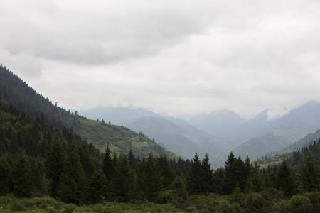plateau of flowers: mountain scenery