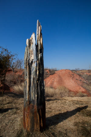 paleontology: Tree petrifaction Stock Photo