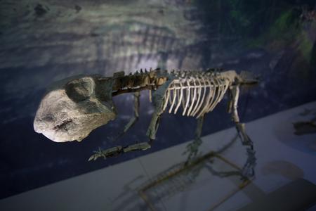 paleontology: Dinosaur bones