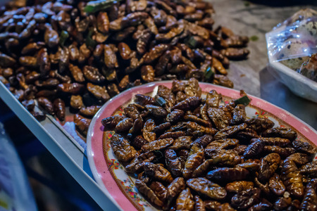 night market: Fried worms, Thai food in the night market