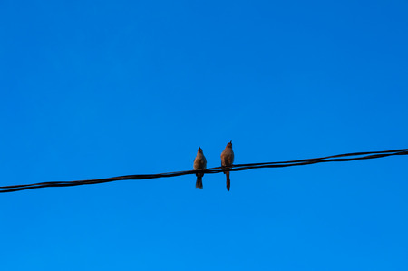 Two Little Birds on cable photo