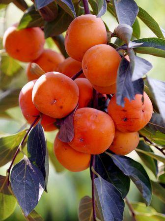 persimmon: Caqui, vegetales, fruta, saludable,
