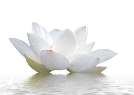 zen flower: lotus, petal, flowers,  Stock Photo